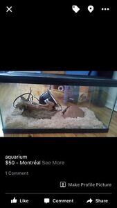 aquarium equipe