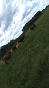 ISO pasture to rent