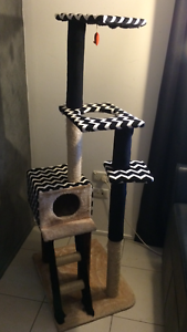 Cat scratch post Southport Gold Coast City Preview