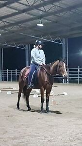 Wanted: experience in horse industry Maitland Maitland Area Preview