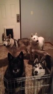 Pet and House Sitting