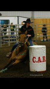 Kids horse / barrel horse