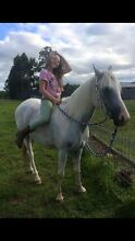 Gorgeous Arab/Paint Gelding Garfield North Cardinia Area Preview