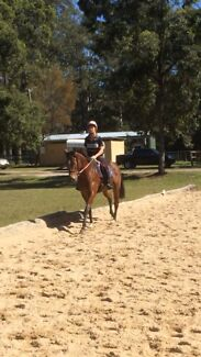 5 year old tb mare 16hh Nerang Gold Coast West Preview