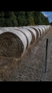 Hay for sale . Round and square bales
