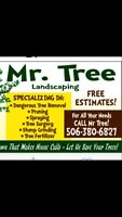 Tree cutting service winter ready. Emergency removal.free quotes
