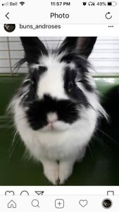 Two Senior Rabbits in Need of Rehoming
