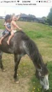 Bombproof horse wanted