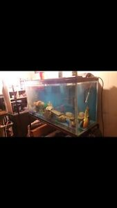 Fish tank (comes with everything!) Kitchener / Waterloo Kitchener Area image 2