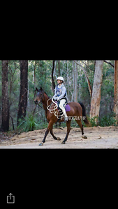 Arabian Mare for sale Homeleigh Kyogle Area Preview