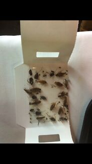 $79 Pest Control Cheap and Best in Rockdale Area