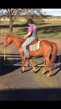 KMC Natural Horsemanship Dalby Dalby Area Preview