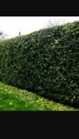 Hedge trimming at great rates