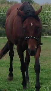 OTTB For sale! Sweet and cute