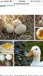 Organic chicken and duck eggs
