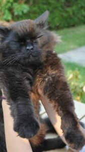 Missing - Elderly Black Cat Oakwood Ave
