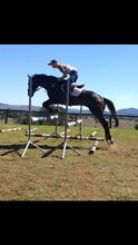 Beautiful eventing prospect Veresdale Ipswich South Preview