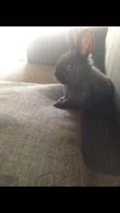 Bunny and hutch for sale Narre Warren Casey Area Preview
