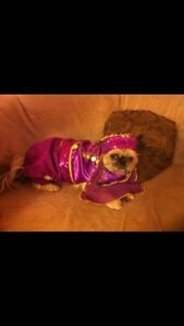 Dog costume pour chien Halloween