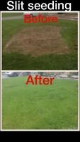 Lawn Spot Repair Free Quotes