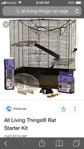 Two male rats for sale