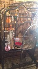 Big bird cage Bankstown Bankstown Area Preview