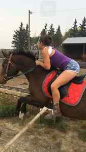 Little bay mare