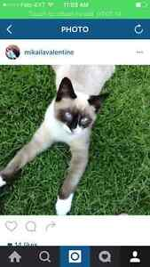 Missing cat!! Please bring him home