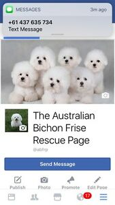 ** NEED HELP TO REHOME YOUR BICHON? ** Newcastle Newcastle Area Preview