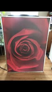 Large Print Rose Picture 55 inches X 39.5 inches