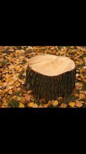 Essouchage/souches d'arbres