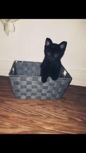 Bb chat femelle à donner