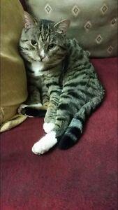 LOST CAT Narre Warren Casey Area Preview