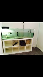 5 ft turtle/fish tank  Crows Nest North Sydney Area Preview