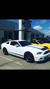 2014 Mustang For sale!