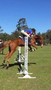 Swap Pony for 16.2 Quiet Mare or $600 Logan Village Logan Area Preview