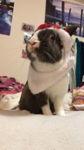 Regretfully selling rabbit and cage