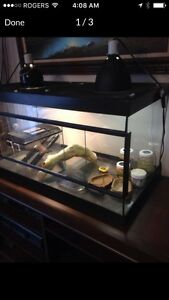 Reptile aquarium and accessories