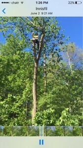 Tree removal full insured