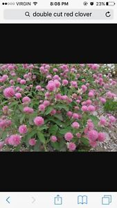 Double Cut Red Clover