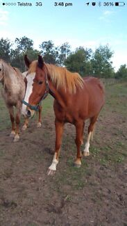 HORSES AND SADDLES MUST GO Dalby Dalby Area Preview