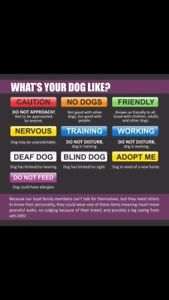 Awareness collars leashes and harnesses