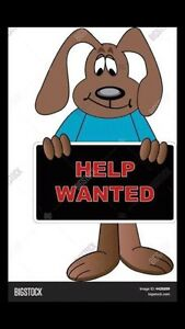 Dog Carer wanted URGENT - please read ALL ad Wynnum Brisbane South East Preview