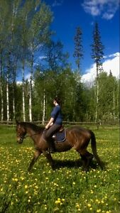 Horse riding lessons (September start)