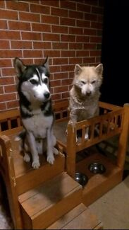 Missing/stolen two huskys from deer park vic  Werribee Wyndham Area Preview