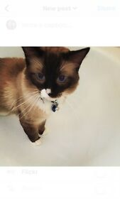 Affordable and Professional Cat Sitting Macquarie Fields Campbelltown Area Preview