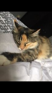 Female cat, almost 2 years old..