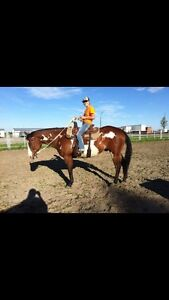 Perfect Family/Ranch Horse *SOLD*