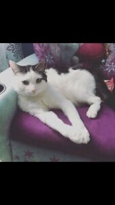 Looking to rehome my two cats