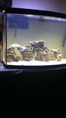Fish tank with corals reef 30 gallons New